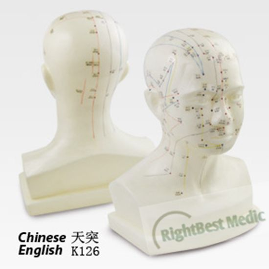 43cm Human Head Acupuncture Points Model