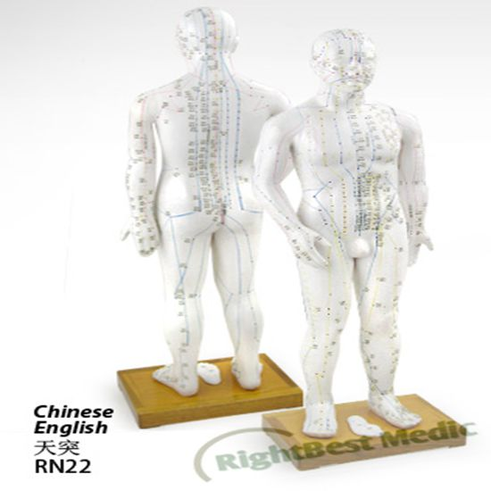 70CM Male Human Body Acupuncture Point Model