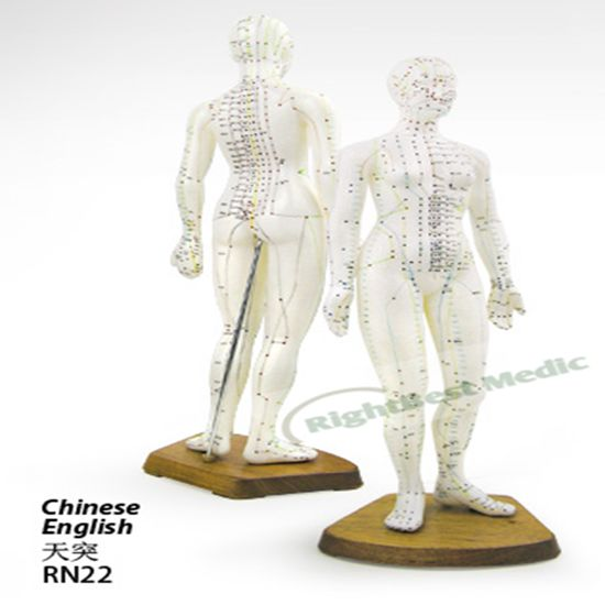 48CM Female Human Body Acupuncture Point Model