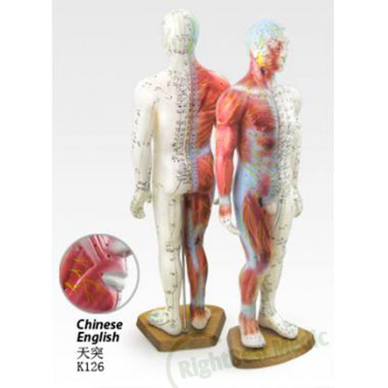 55CM Male Human Acupuncture Points&Muscle Model